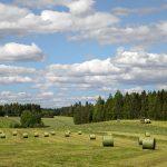 Elämää 2000-luvun Suomessa